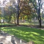 Wrocław trawa wielofunkcja